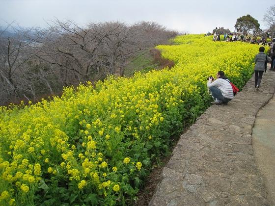 IMG_菜の花ブログ用1.jpg
